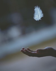 Karen Griffin Reiki Feather